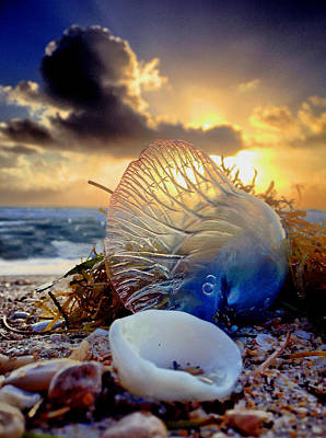 Photograph - Man O War - Adventures Done by Andrew Royston