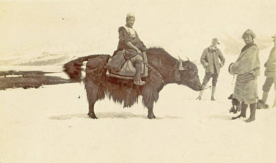 Yak Drawing - Man On A Yak In Tibet by Artokoloro