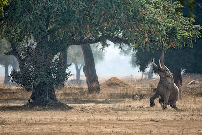Trunk Photograph - Mana Pools Secret by Alessandro Catta