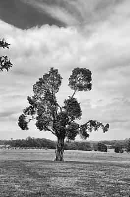 Photograph - Manassas Battlefield Tree by Guy Whiteley