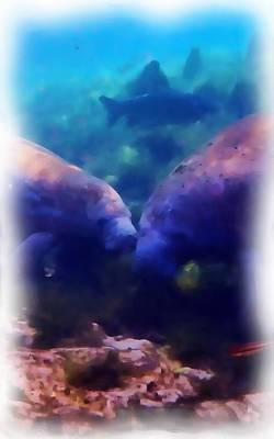 Photograph - Manatee Family 1 by Sheri McLeroy