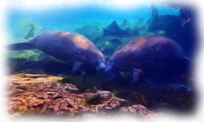 Photograph - Manatee Kiss 1 by Sheri McLeroy