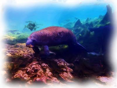 Photograph - Manatee Reflection 1 by Sheri McLeroy