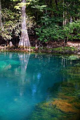 Art Print featuring the photograph Manatee Spring by Doug McPherson