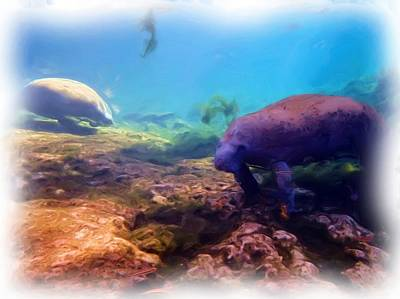 Photograph - Manatees Feeding 2 by Sheri McLeroy