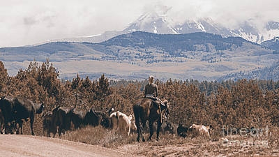Cattle Drive Photograph - Mancos Cowgirl Cattle Drive by Janice Rae Pariza