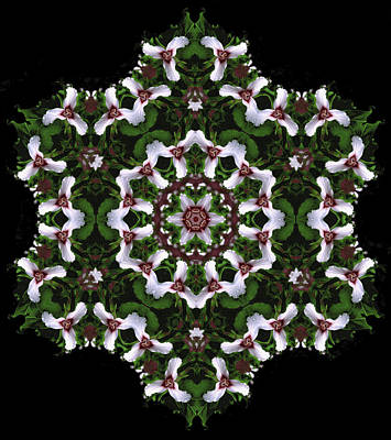 Digital Art - Mandala Trillium Holiday by Nancy Griswold