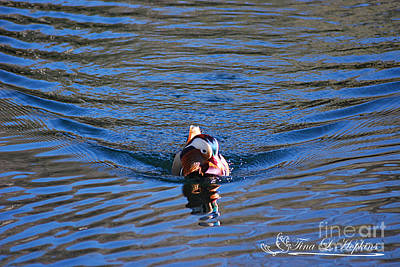 Photograph - Mandarin Duck 20131218_279 by Tina Hopkins