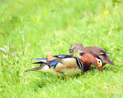 Mandarin Duck Couple Art Print
