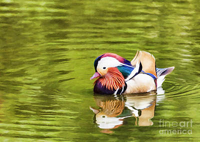 Duck Digital Art - Mandarin Reflection by Liz Leyden