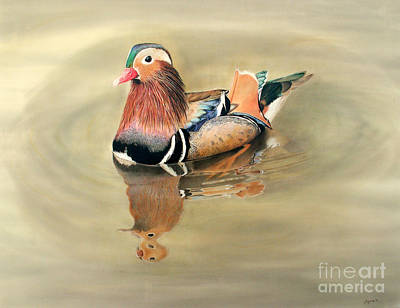 Mandarin Drawing - Mandarine Duck by Patty Poole