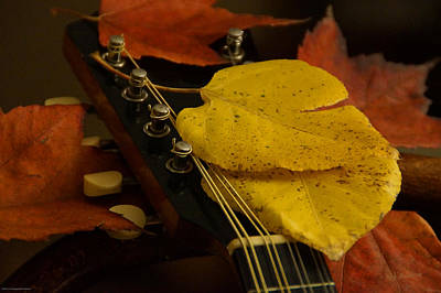 Photograph - Mandolin Autumn 6 by Mick Anderson