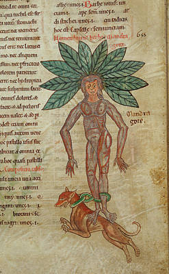 Mandrake Chained To Dog Art Print by British Library