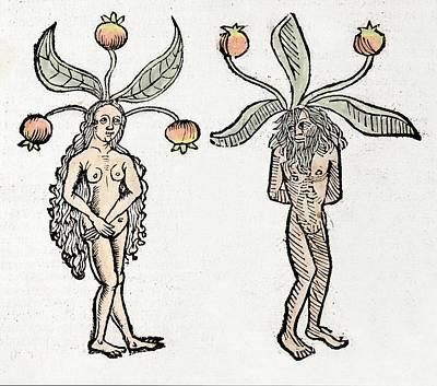 Mandrakes Art Print