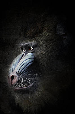 Old World Mixed Media - Mandrill Portrait by Heike Hultsch