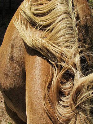 Wall Art - Photograph - Mane Event by Shannon Story