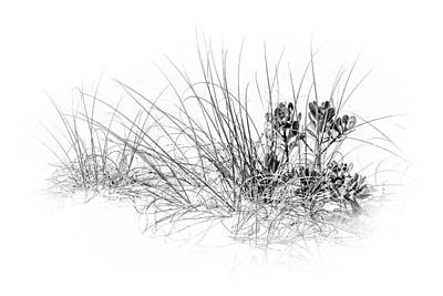 Mangrove And Sea Oats-bw Print by Marvin Spates