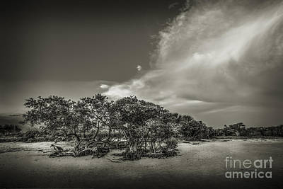 Mangrove At Low Tide Art Print