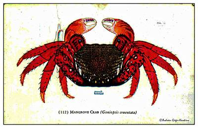Digital Art - Mangrove Crab 1932 Vintage Postcard by Audreen Gieger