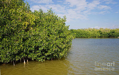 Mangrove Forest Digital Art - Mangrove Fores by Carol Ailles