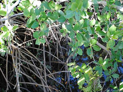Digital Art - Mangrove Greenery  by Steve Sperry