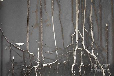Mangrove Forest Digital Art - Mangrove Heron by Adrian Hillman