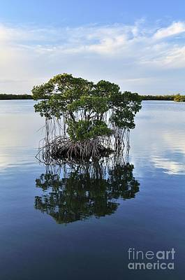 Photograph - Mangrove Island by Andres LaBrada