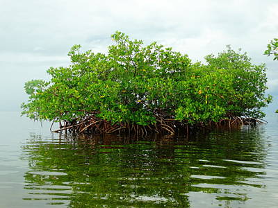 Photograph - Mangrove Island by Frederic BONNEAU Photography