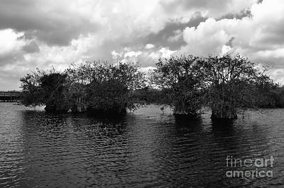Mangrove Islands Art Print