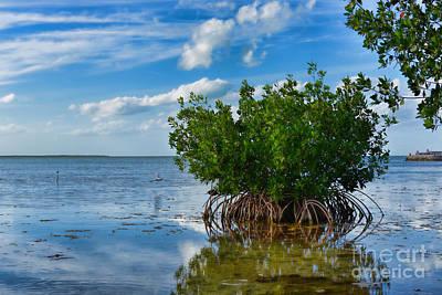 Photograph - Mangrove by Olga Hamilton