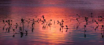 Mangrove Paradise Print by Karen Wiles