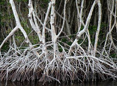 Mangrove Roots Art Print
