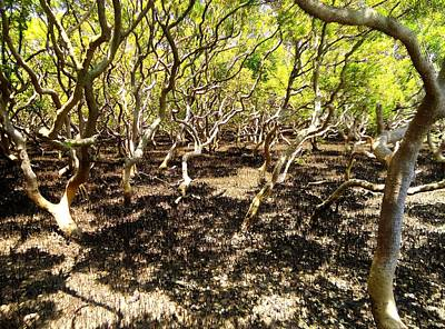 Photograph - Mangrove Swamp by Peter Mooyman