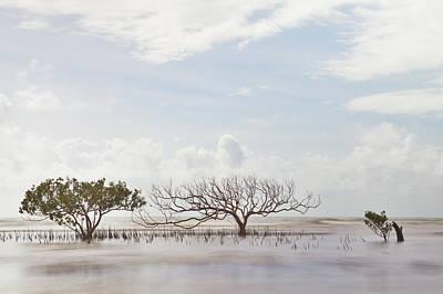 Mangrove Tree In Blurred Sea Art Print by Dirk Ercken