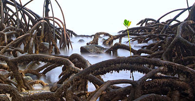 Mangrove Tree Roots Detail Art Print by Dirk Ercken