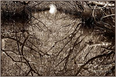 Photograph - Mangrove Tunnel by Angela Murray