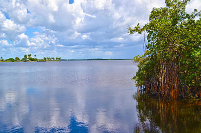 Art Print featuring the photograph Mangroves In Matlacha Florida by Timothy Lowry