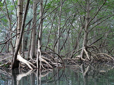 Photograph - Mangroves Reflection by Frederic BONNEAU Photography