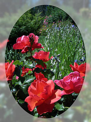 Photograph - Manito Roses by Georgia Hamlin