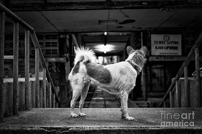 Photograph - Man's Best Friend by Dean Harte