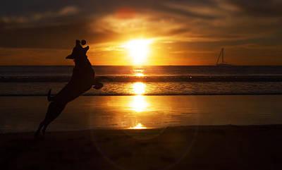 Sun Rays Mixed Media - Man's Best Friend  by Kenny  Noddin