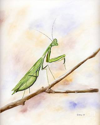 Drawing - Mantis by Rosellen Westerhoff
