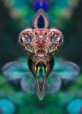 Photograph - Mantis by WB Johnston