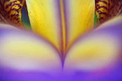 Photograph - Mantra Of Beauty. Wisdom Inside by Jenny Rainbow