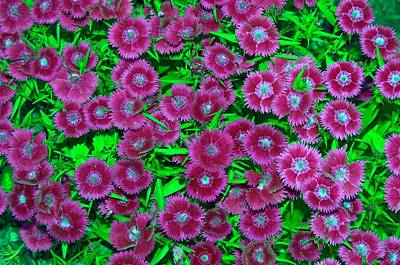 Photograph - Many Blooms by Michael Sokalski