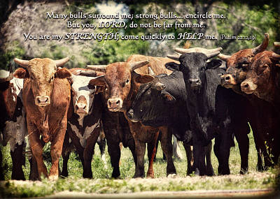 Photograph - Many Bulls Surround Me By Lincoln Rogers by Lincoln Rogers