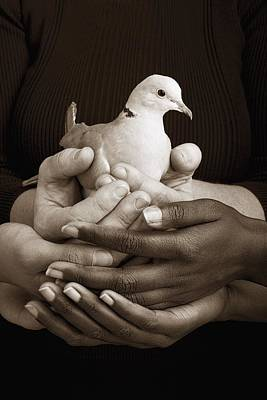 Many Hands Holding A Dove Art Print