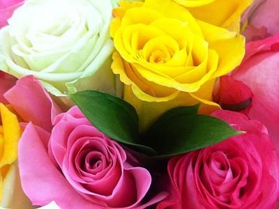 Photograph - Many Roses by Alohi Fujimoto