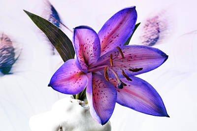 Lilies Royalty-Free and Rights-Managed Images - Many Shades Of Lily. by Terence Davis