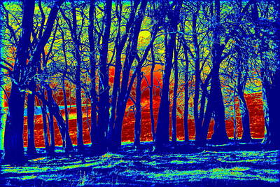 Photograph - Many Trees II by Kathy Sampson